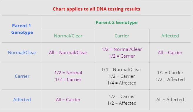 dna chart
