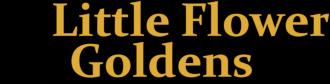 LIttle Flower Goldens